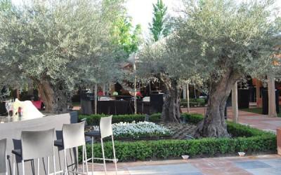 Boda en la Quinta del Jarama