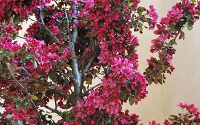 Boda primaveral en el Esquileo